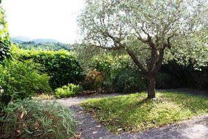 Uno degli ulivi nel giardino del B&B