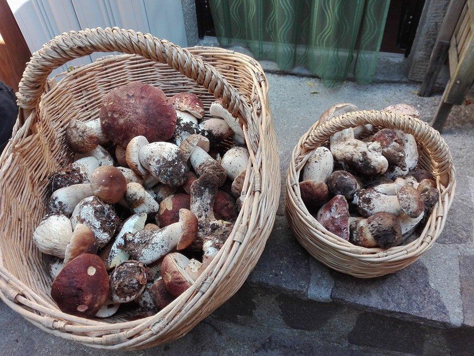 Funghi in Toscana: i porcini della riserva Valdantena